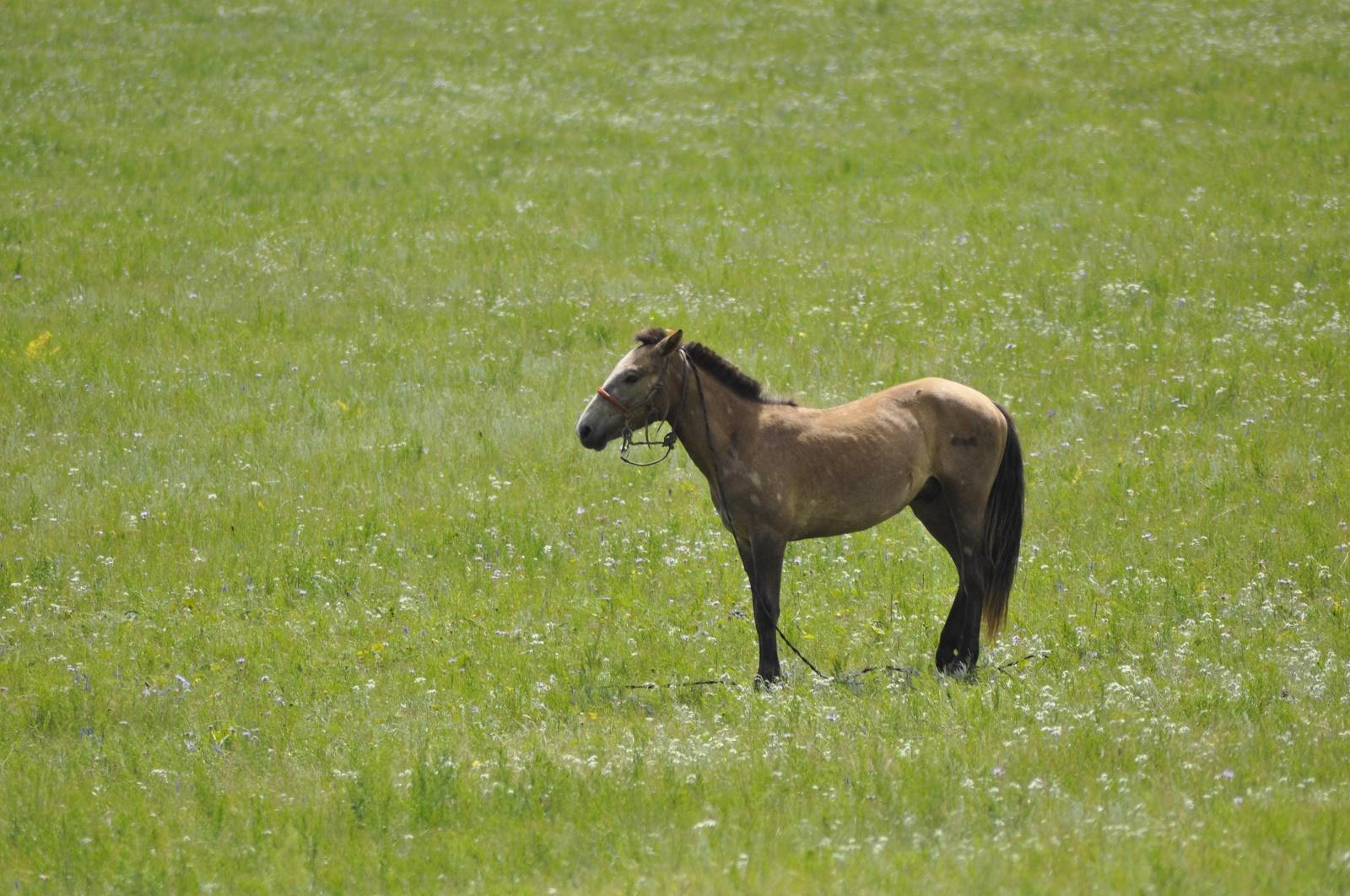 注意力と集中力はどう違うのか ―野生の馬と競馬の馬