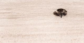 スーザン・ケイン「内向型人間の時代」感想 内向型よ、荒野に出よ、革新を行おう
